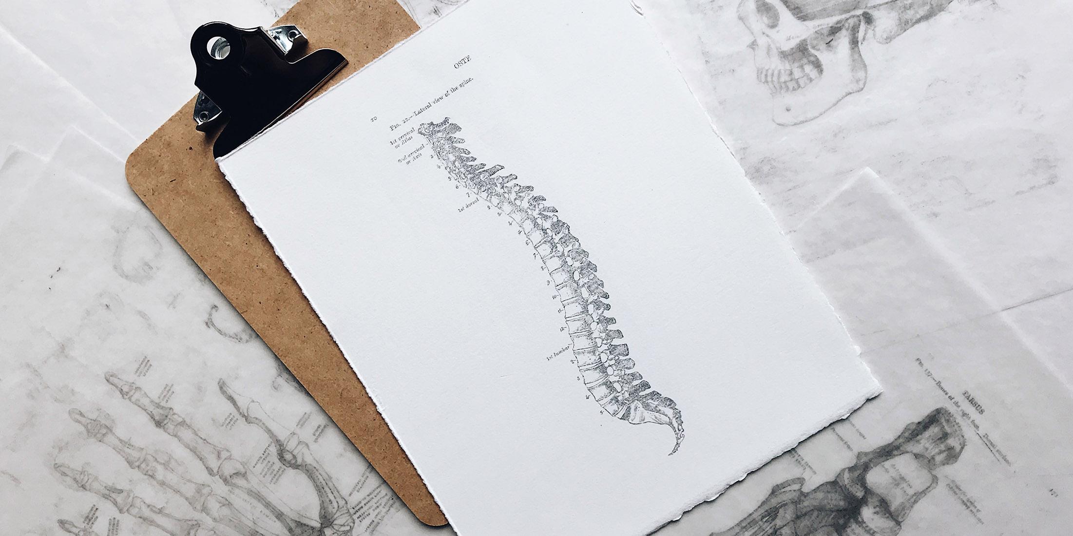 Le ossa: solidità, flessibilità e sostegno | Corso online di Franco Bottalo e Maurizio Parini